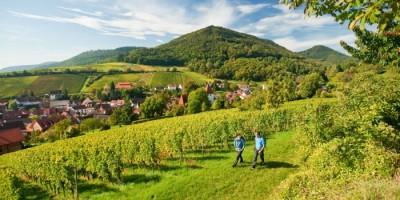 Vinorten Leinsweiler i Rheinland-Pfalz