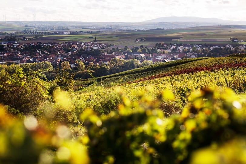 Vinregionen Rheinhessen (Rheinland-Pfalz) med utsikt över Bechtolsheim